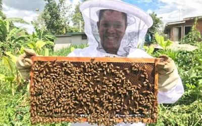 Henao maximises on agribusiness learnings and networks back in the honey industry